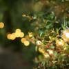 garden lighting package festoon