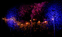 Garden Lighting Festoon Uplighters Bush Clownfish Events Woodlands