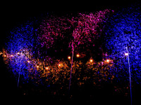 Garden Lighting Festoon Uplighters Bush Clownfish Events Woodlands