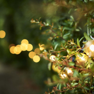 garden lighting package festoon