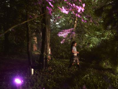 Shinnyo Festival_Woodland Lighting